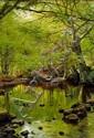 Peder Mønsted: Springtime in the forest.