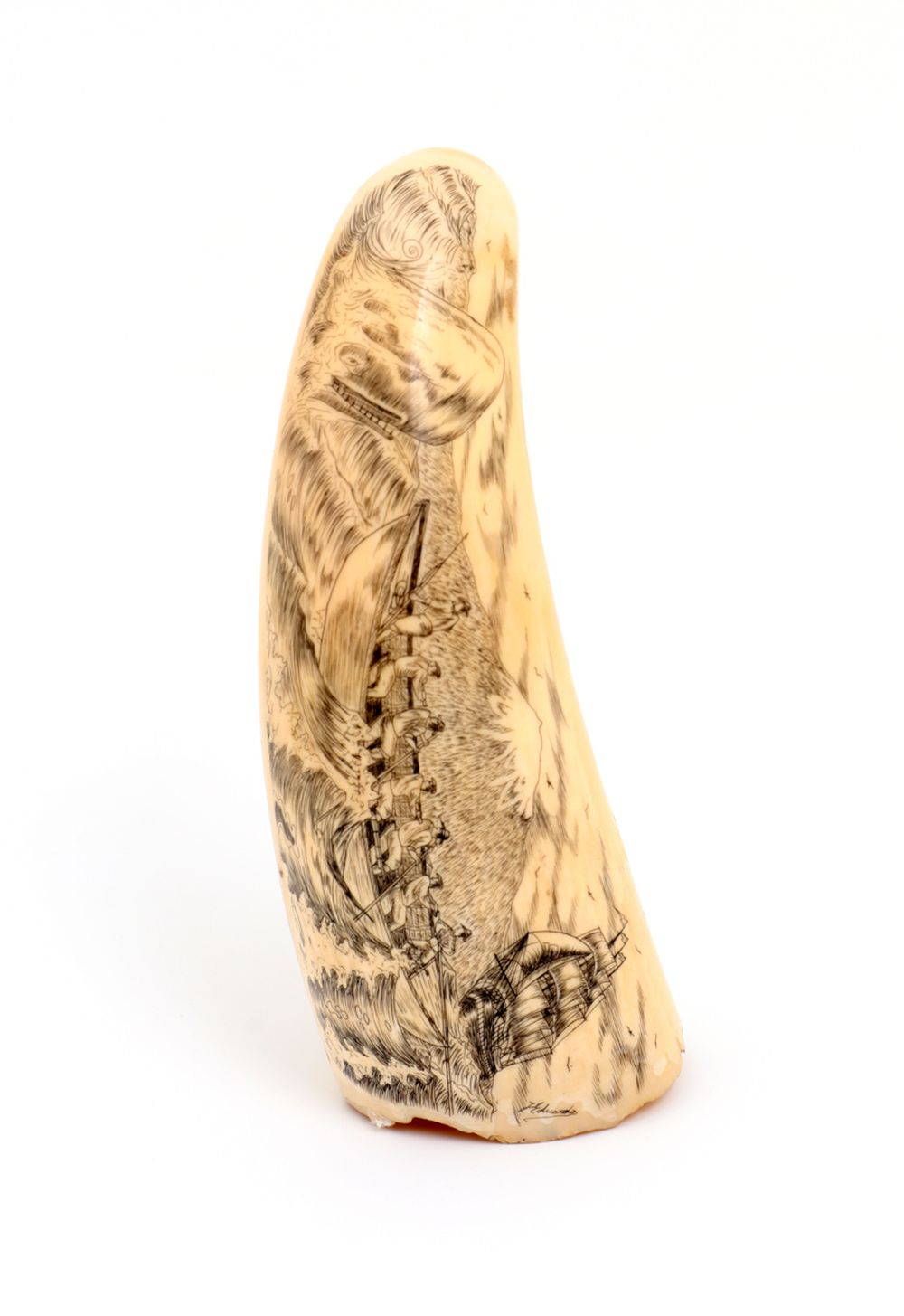 A SPERM WHALE TOOTH - SCRIMSHAW