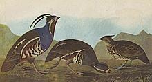 John James Audubon Circa 1946 MOUNTAIN QUAIL