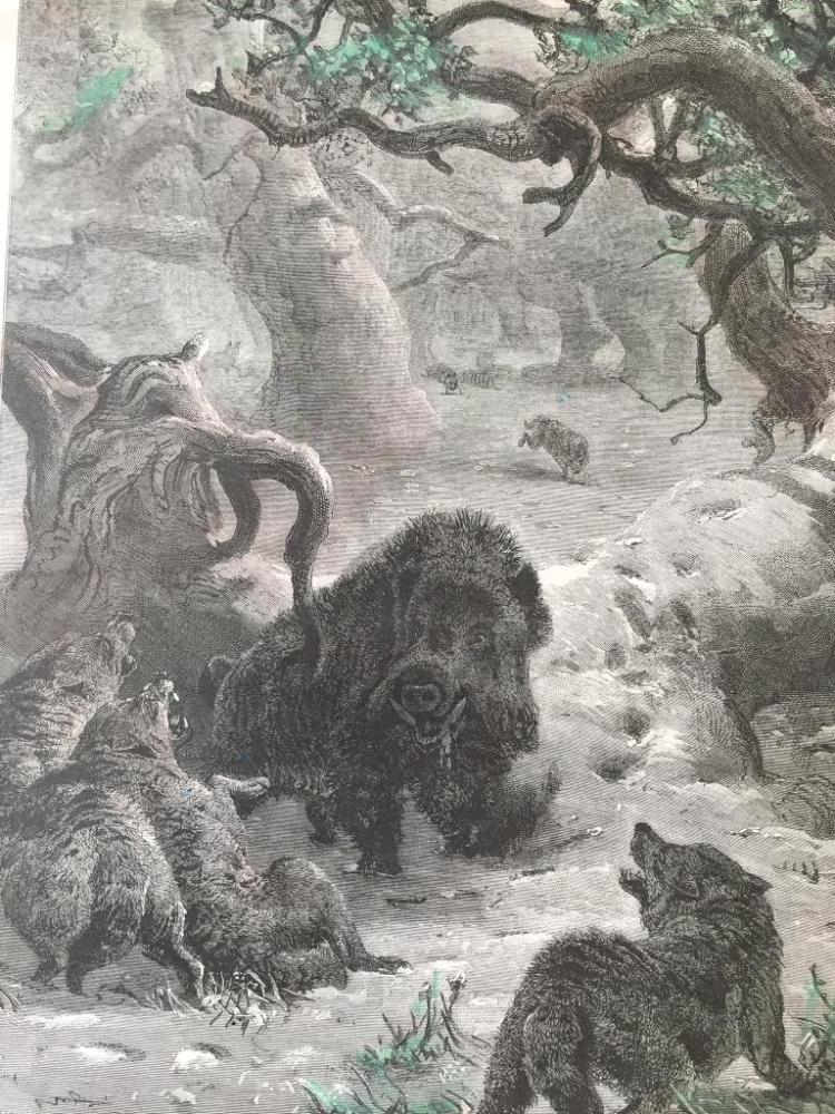 19thc Engraving, Wild Boar Hunted by Wolves