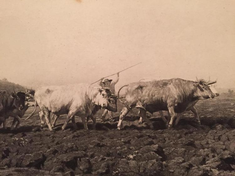 1880's Photogravure, Rural Landscape, Bonheur