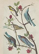 John James Audubon Circa 1946 WARBLER AND BLUEBIRD