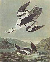 John James Audubon Circa 1946 SMEW
