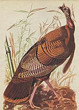 John James Audubon Circa 1946 WILD TURKEY