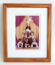 Wall decor - dogs and cat funny print