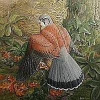 Watercolours: GARETH PARRY watercolour - detailed