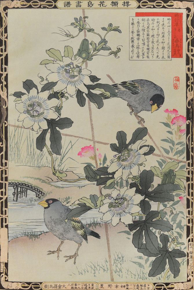 Passion Flower ans Japanese Grosbeak