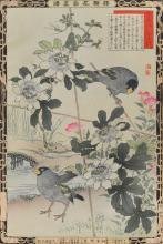 Passion Flower ans Japanese Grosbeak