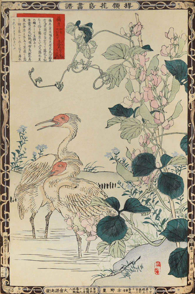 Snow-pea and Ibis