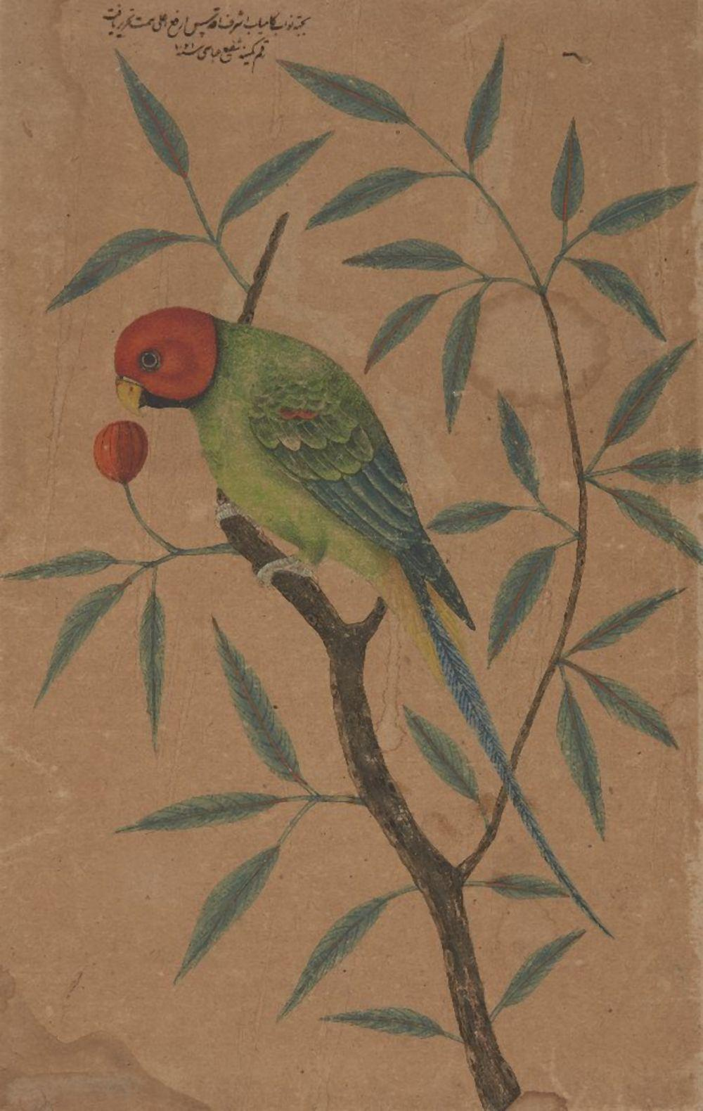 Property from an Important Private Collection A drawing of a parrot, 20th