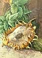 Anthony Baynes 1921-2003- Sunflowers; gouache,