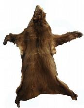 Black Bear Coat in Cinnamon Phase