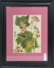 Pair of Audubon Prints