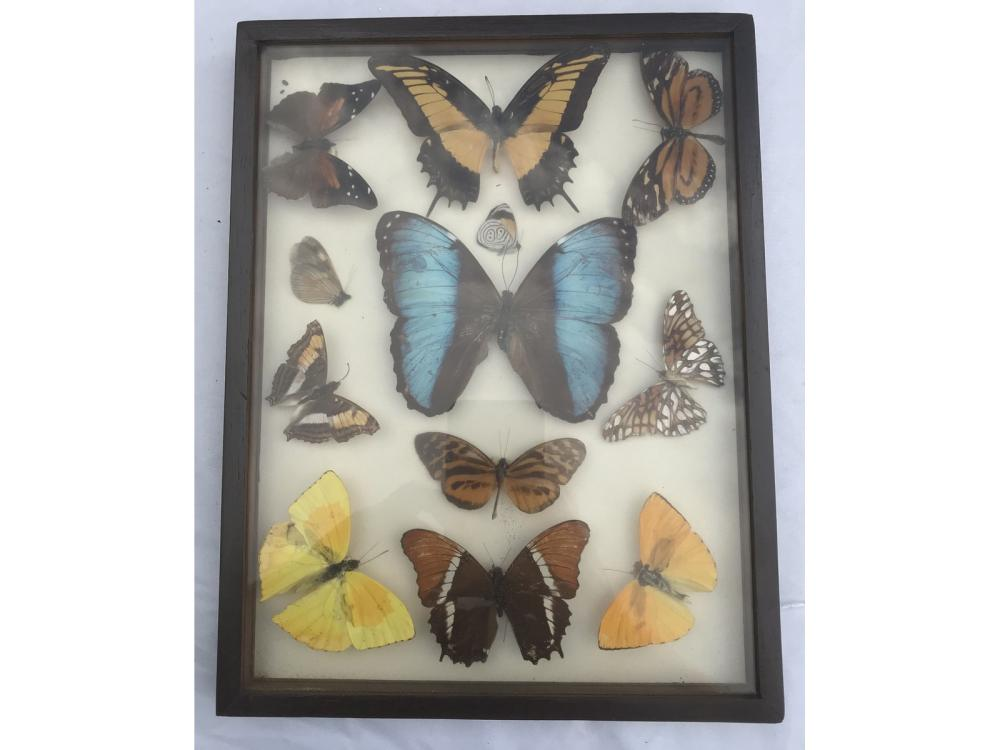 Pair Of Framed And Dried Butterfly Displays