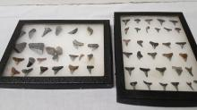 2 sharks teeth display cases with teeth