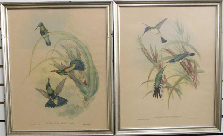 (2) FRAMED ANTIQUE BIRD PRINTS