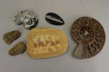 (6) Assorted Fossils & Rocks