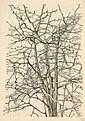 Martin Erich Philipp (MEPH), Konvolut von 33 Tier- und Pflanzenstudien., Martin E. Philipp, Click for value
