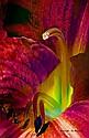 Ray St Arnaud---Flower 7412