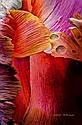 Ray St Arnaud---Flower 0520