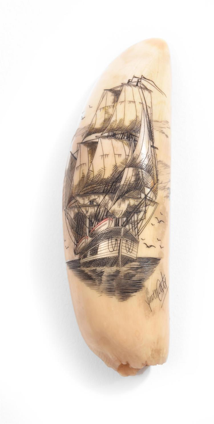 WHALE TOOTH SCRIMSHAW.