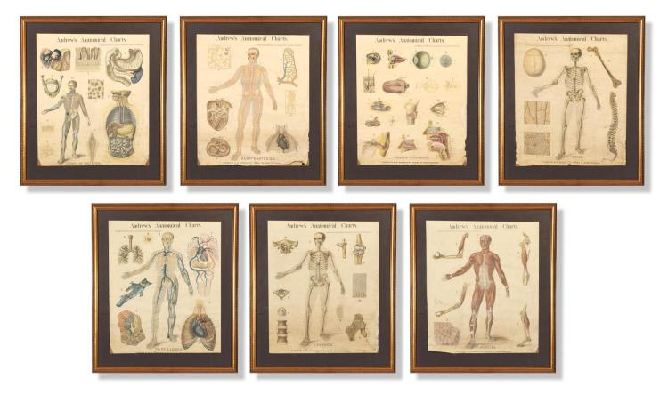 SEVEN ANDREW''S ANATOMICAL CHARTS BY WILLIAM TURNER (BRITISH, LATE 19TH CENTURY).
