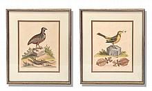 TWO HAND COLORED ORNITHOLOGICAL PRINTS BY GEORGE EDWARDS, (ENGLISH 1694-1773).