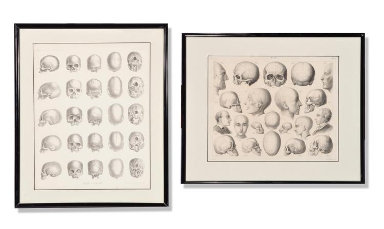 TWO PHRENOLOGY LITHOGRAPHS.