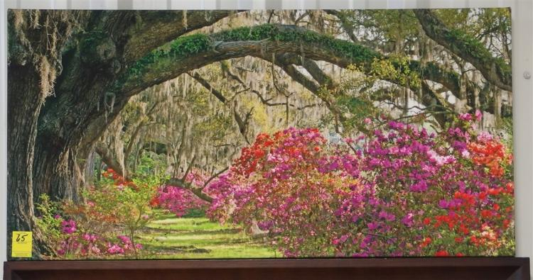 Lot 65: Azaleas & Grand Oak with Spanish Moss – Canvas Print, 20x40
