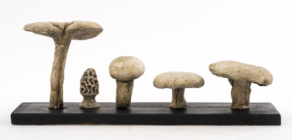Mushroom Specimens, 6. pcs.