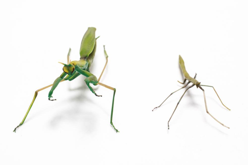 Italian Murano Glass Praying Mantis Stick Bug 2