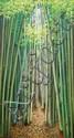 Bardi, S (b. Yogyakarta, 1944) Hutan Bambu 2012