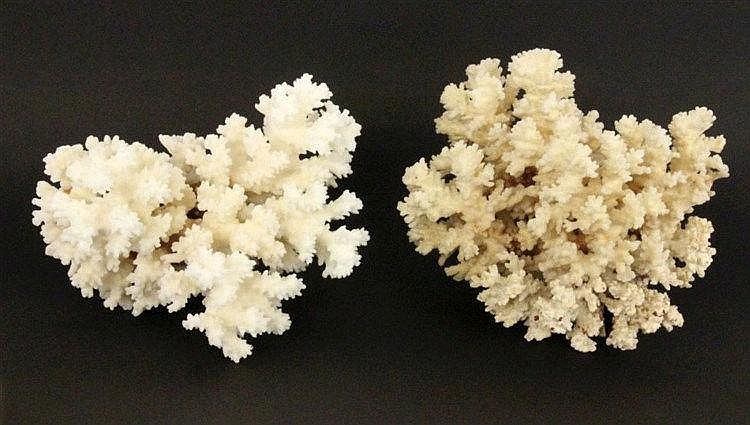 TWO WHITE CORAL COLONIES China ca. 1900, ca. 20cm