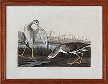 After JOHN JAMES AUDUBON (American 1785-1851)