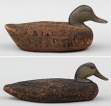 Group of two Black Ducks