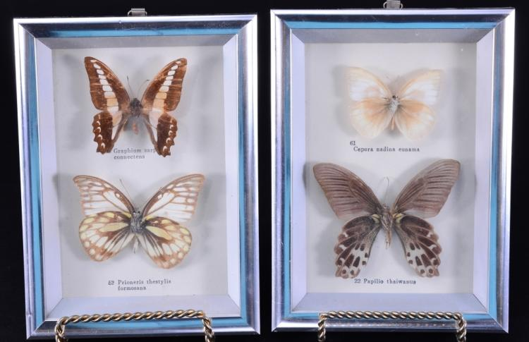 Framed Butterfly Specimens