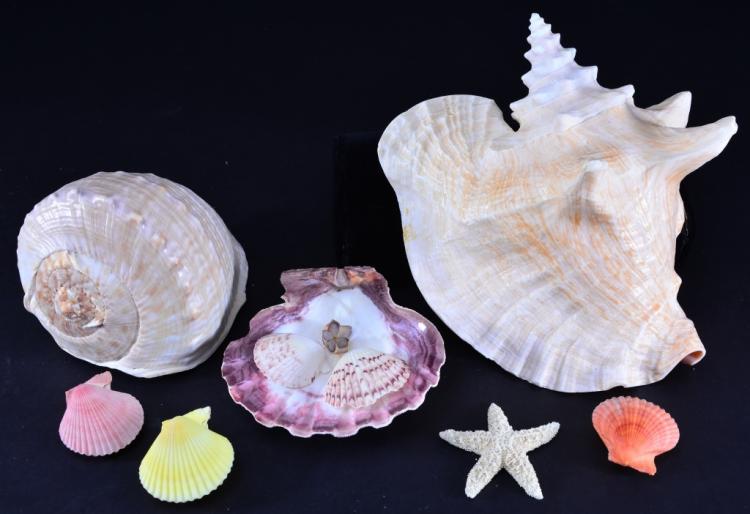 Shell Lot