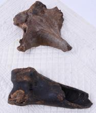 Two Fossilized Bones