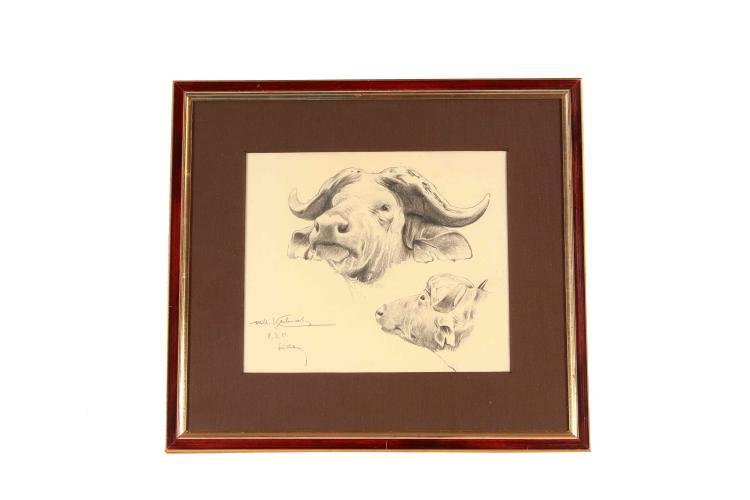 Wilhelm Kuhnert, charcoal drawing Sudanes buffalo study
