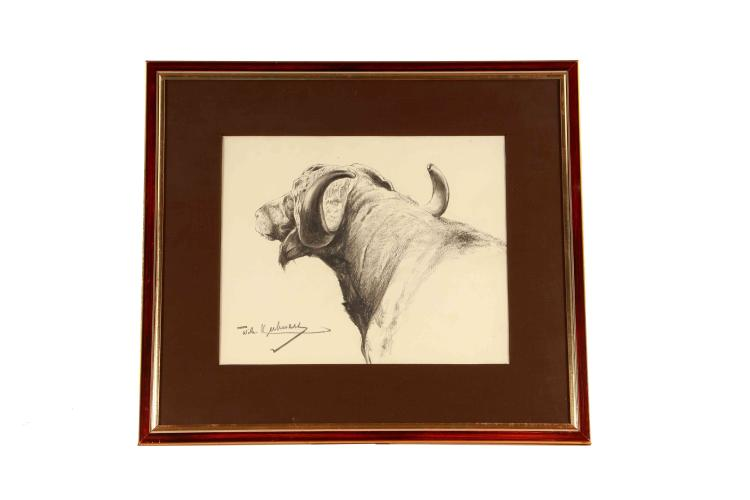 Wilhelm Kuhnert, charcoal drawing Cape buffalo