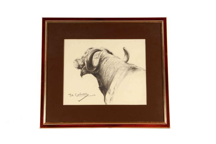 Wilhelm Kuhnert, charcoal drawing Cape buffalo