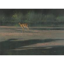 Kim Donaldson; South African 1952-; Impala on River Bank