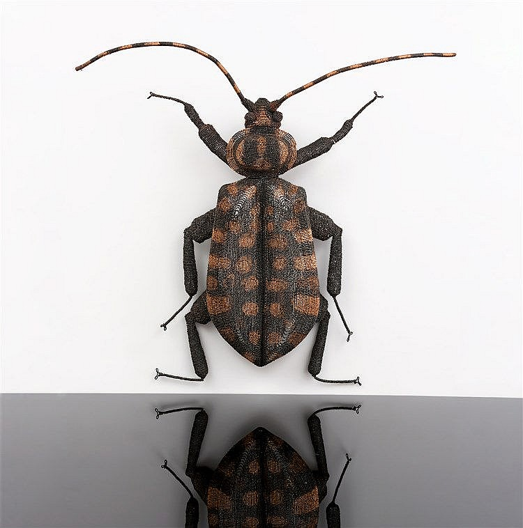 Walter Oltmann - Spotted Beetle