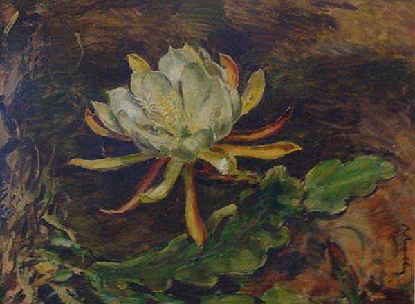 Robert Broadley South African 1908-1988 A Flower