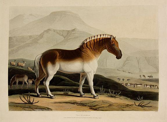 Samuel Daniell (1775-1811) African Scenery and