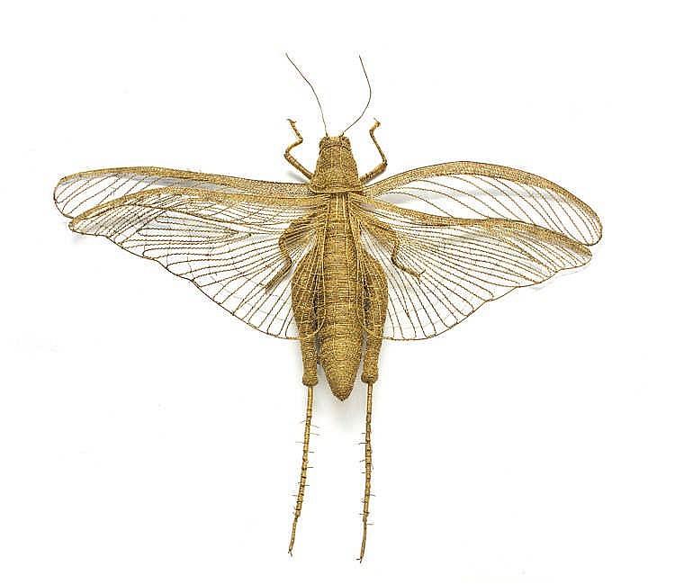 Walter Oltmann - Locust
