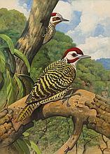 Phillip Alexander Clancey - Woodpeckers