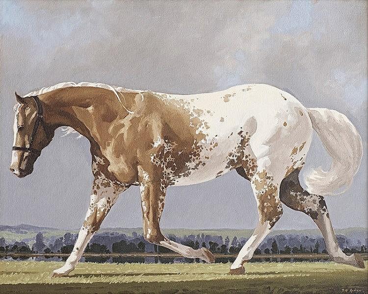 John Neil Rodger - Appaloosa Stallion