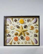A framed collection of sea shells and a starfish
