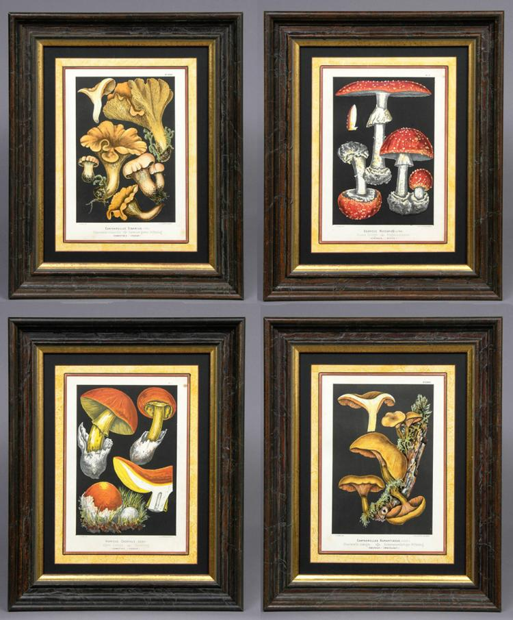 Set Four Mushroom Chromolithographs, Circa 1890